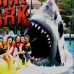 Köpekbalığı oyunu