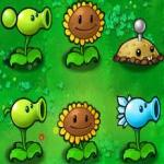 Plants vs zombies oyunu